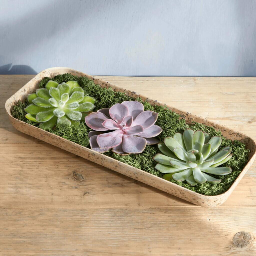 Competition win The super succulent